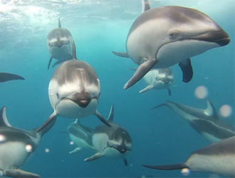 Dolphins Filmed with Torpedo Housing