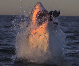 Slow Motion Shark Attacks