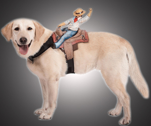 Dog Rider Pet Costumes