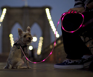 Pup Crawl Illuminated Dog Leash